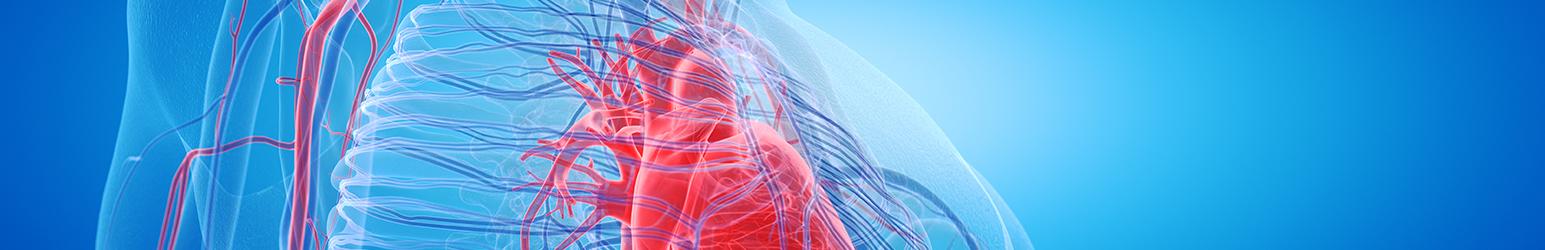 Eco - Vasculară - Doppler